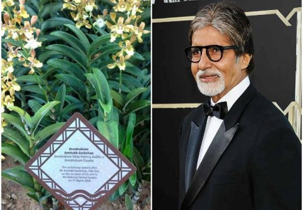 Amitabh Bachchan- An orchid flower