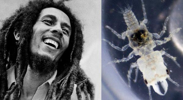 Bob Marley- A fish parasite