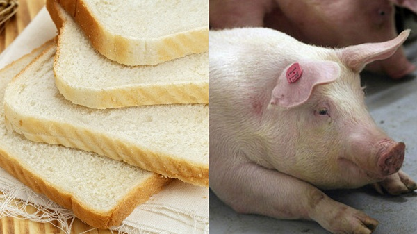 Bread Contains Pig Meat