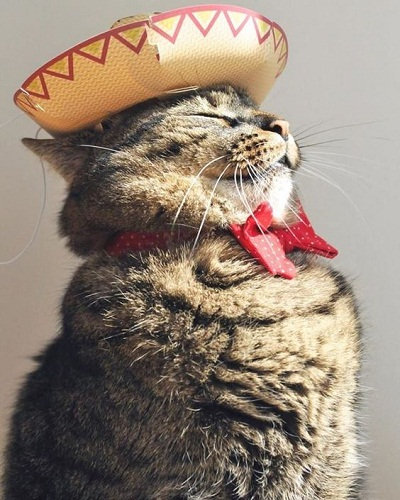 Turn Your Frown Upside Down With These Adorable Cat Pictures!